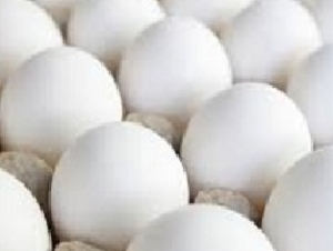 egg wholesale